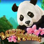 lucky-panda_239х180